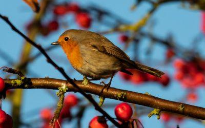 A Little Birdie in a Tree