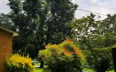 Raindrops Refrain